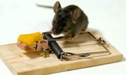 इस चूहे पकड़ने की मशीन में लगा है WI-Fi, जो चूहा पकड़ते ही स्मार्टफोन पर भेजेगा नोटिफिकेशन