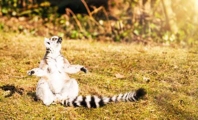 जानवरों के ये योग के पोज देखकर सिखाने वाले गुरु भी शरमा जाएं