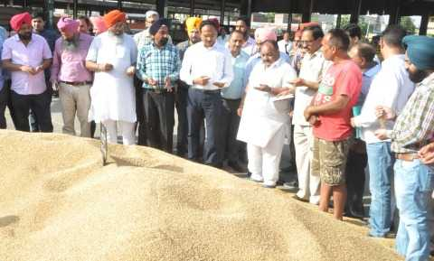 Purchasing wheat in food grain market